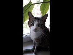 Как я готовлю еду своим котятам.How I cook my kittens. - YouTube Cats, Youtube, Animals, Gatos, Animales, Animaux, Animal, Cat, Animais