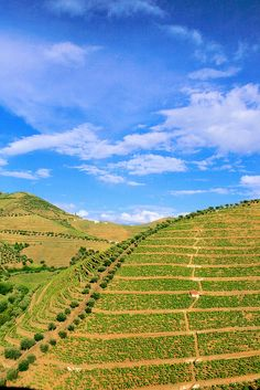 Douro Valley | #Porto #Portugal #Dourovalley | Visit: http://www.the-yeatman-hotel.com/en/packages-programmes/