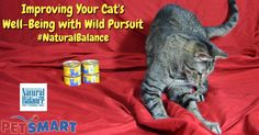 Improving Your Cat's Well-Being with Wild Pursuit #NaturalBalance