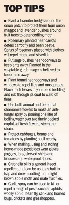 Pennie Woodward knows her bugs and her plants. A simple guide to companion planting and the uses of herbs. #OrganicGarden