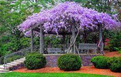 Caramanchão, Jardim e Poesia • Jardim de Siguta •