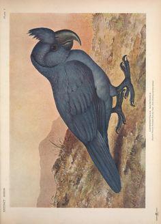 Extinct birds : an attempt to unite in one volu...