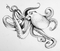 black and white, drawing, and octopus image