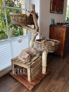 Special designs, your scratching post, also for big cats - natural wood trees . - Einrichtung - Custom-made products, your cat tree, also for big cats – natural wood trees for cats Informations - Cat Tree House, Diy Cat Tree, Cat Trees, Madeira Natural, Cat Shelves, Cat Playground, Cat Enclosure, Cat Room, Outdoor Cats