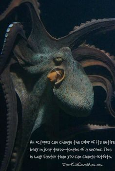 An octopus can change the color of its entire body in just three-tenths of a…