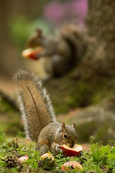 Secret Squirrel (par JasonBrownPhotography)