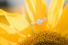 Simply Picturesque Maryland Wedding and Lifestyle photographer close up engagement ring in a field of sunflowers ring bling