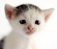 Cat With No Name, by Von McKnelly