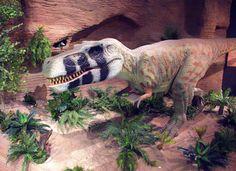 Our new Albertosaurus!