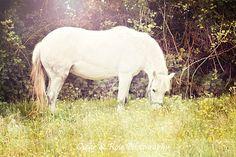 White horse in field