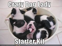 'Crazy Dog Lady', French Bulldog Starter Kit.