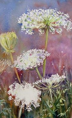 Cow Parsnip in Meadow By Ann Blockley