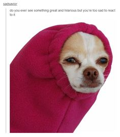 Best of Tumblr part 4. Dog SweatersFunny