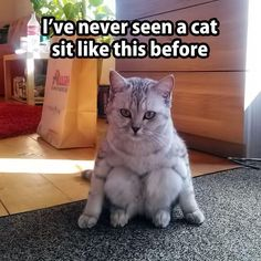 Have you ever seen a cat sit like this before?