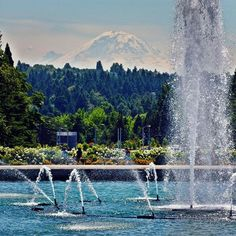 The fountain and the mountain are quite the dynamic duo! #MtRainier #DrumhellerFountain #UW