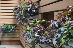 in-fence hanging garden - possibley for privacy wall on north east wall. Plants could cascade down the wall