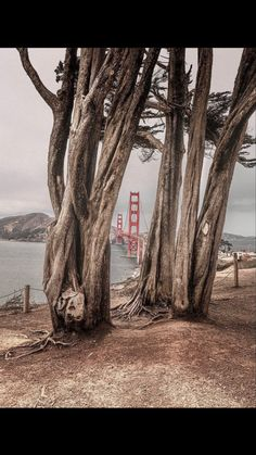 Golden Gate Bridge, Plants, Plant, Planets