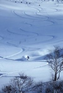 Snow in Niseko... something that simply needs to be experienced…