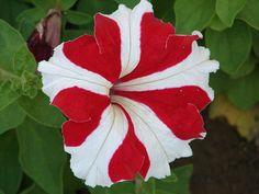 flower stalk definition
