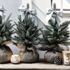 Mini Faux English Pine Tree | The White Company