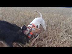 Pig hunting with dogs Australia 2017 Pig Hunting Dogs, Hog Hunting, Hog Dog, Australia 2017, Dog Runs, Art For Art Sake, Coops, Mans Best Friend, Land Cruiser