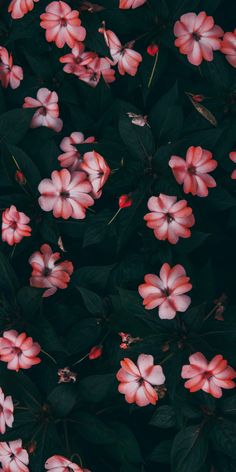 Flower wallpaper, i wallpaper, wallpaper quotes, homescreen wallpaper, cell Flower Iphone Wallpaper, Sunflower Wallpaper, Iphone Background Wallpaper, Tumblr Wallpaper, Flower Backgrounds, Aesthetic Iphone Wallpaper, Cellphone Wallpaper, Nature Wallpaper, Cool Wallpaper