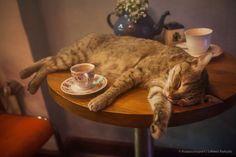 Όπως αυτή η γάτα αναπαύεται μεταξύ καφέδων και σόμπας σε ένα vintage καφέ στο Φανάρι της Κωσταντινούπολης, έτσι και όσοι δούλευουν θα θέλανε να παρακολουθούν το χιόνι απο το παράθυρό τους πίνοντας ένα ζεστό ρόφημα. Υπομονή το ΣΚ πλησιάζει.