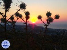 - Zorbas Island apartments in Kokkini Hani, Crete Greece 2020 Mykonos Greece, Crete Greece, Athens Greece, Santorini, Places To Travel, Travel Destinations, Greek Isles, Greece Islands, Corfu