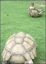 거북이의 의리