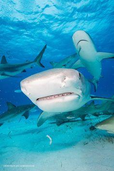 shark mouth-9-2015-2-12