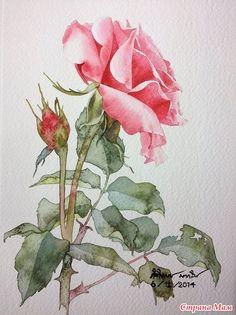 Художник — акварелист Ti Watercolor-Kitipong Maksin