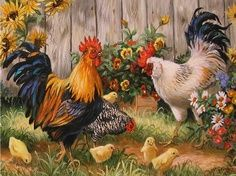 Roosters and chicks