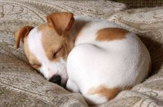 #sleep #dog #baby