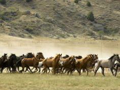 Find any Poster, Art Print, Framed Art or Original Art at Great Prices. Wild Animal Sanctuary Colorado, Nebraska, Wyoming, South Dakota Travel, North Dakota, North America, Montana, Horse Ranch, Wild Mustangs
