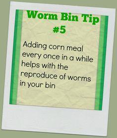 Worm Bin Tip Quick way to multiply your red wiggers Organic Farming, Organic Gardening, Vegetable Gardening, Container Gardening, Grain Free, Dairy Free, Red Wiggler Worms, Worm Beds, Red Wigglers