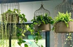 HANGING BIRD CAGE PLANTERS are a great way to add drama and greenery at a high level. #retailinteriordesign #indoorgreenery #hangingplants #birdcageplanters Hanging Bird Cage, Hanging Pots, Retail Interior Design, Winter's Tale, High Level, Amazing Gardens, Plant Hanger, Bangkok, Greenery