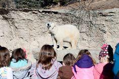 Safari Mini-Camps | Denver Zoo | The Denver Ear