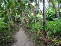 Coconut palms, Dravuni Island