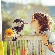 Penguin Bloom – Quand une pie devient la meilleure amie d'une famille | Ufunk.net