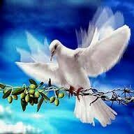 Colomba della pace.