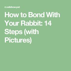 How to Bond With Your Rabbit: 14 Steps (with Pictures)
