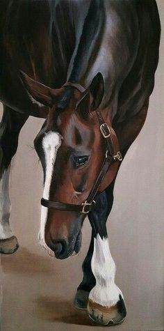 ARTFINDER: Gentle George by Stephanie Greaves - A beautiful thoroughbred x cob gelding I met last summer, George has been the subject of a commissioned painting and now this original. He has the sweetest d. Horse Pictures, Art Pictures, Arte Equina, Horse Illustration, Horse Artwork, Horse Drawings, Equine Art, Western Art, Animal Paintings