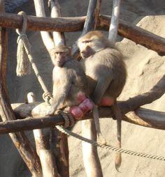 Válogatás a Baby Baboons legizgalmasabb cikkeiből... :: babybaboons