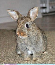 Bunny Foo-Foo!