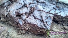 Decadent Chocolate, Chickpea and Peanut Butter Brownies
