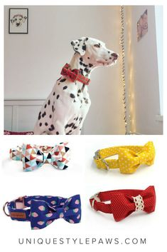 Choose Size Made In USA Up Country Dog Puppy Design Collar Sea Turtle