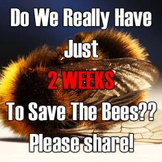 Bees are annoying, let's be honest, but they are SO important to us! They are the reason we have food! If you like to eat then you can thank bees for pollinating crops and making honey.