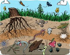 Gardening to Beat Climate Change