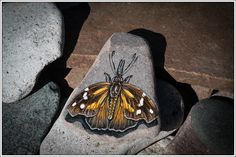 American Snout Butterfly on Lake Superior Stone by StonewingsbyOshi on Etsy