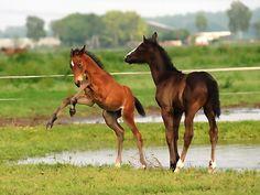 foals at Keystud